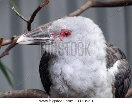 Chanel Cuckoo