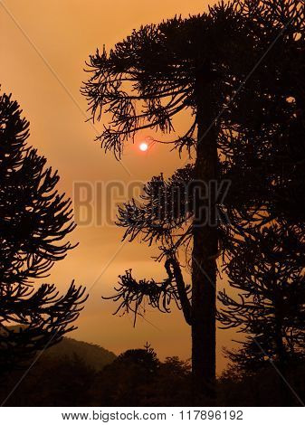 Silhouette Of A Tree In The Smoke From Forest Fire