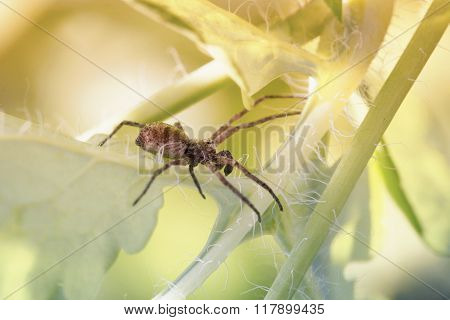 spider crawls in the grass