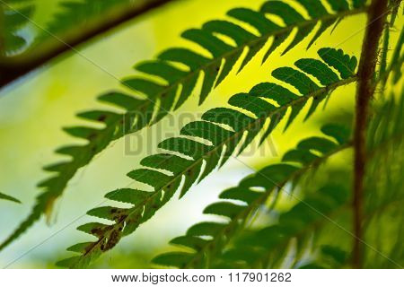 Tree fern at a rain forest