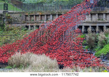 Red Ceramic Poppies
