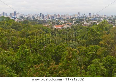 Forest And Cityscape Of Curitiba