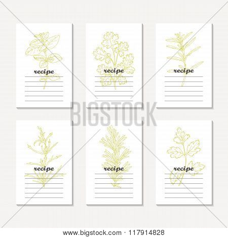 Recipe cards collection with hand drawn spicy herbs. Sketched tarragon, cilantro, parsley, rosemary,