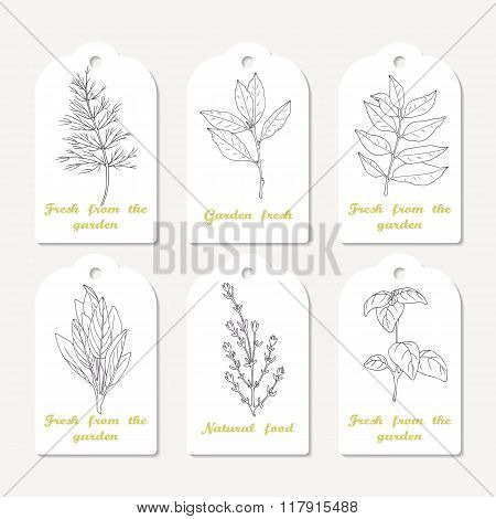 Tags collection with hand drawn spicy herbs dill, bay leaf, curry, sage, thyme, basil