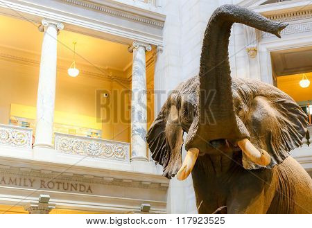 Elephant and Rotunda