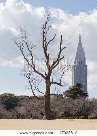 Unusual Landscapes Tokyo