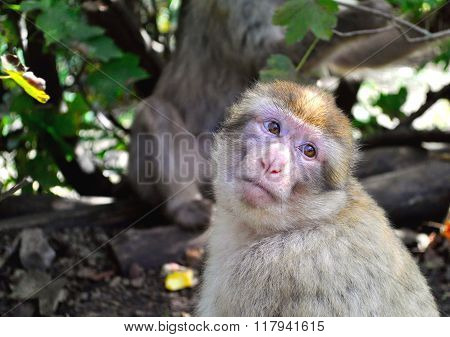 Portrait Of A Cute But Sad Monkey