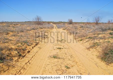 Dirt road in desert terrain