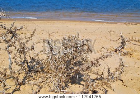 Dry thorn steppe on the banks of the river