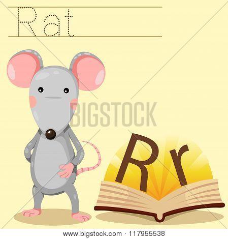 Illustrator of r for rat vocabulary