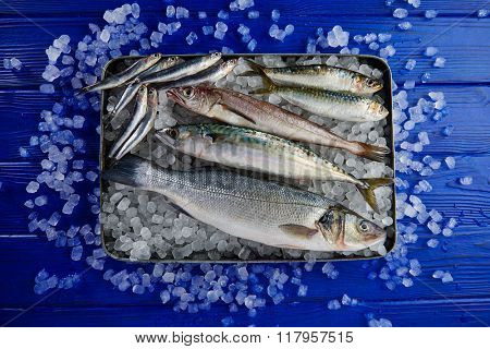 Fresh fishes mix hake seabass sardine mackerel anchovies on ice and blue wood