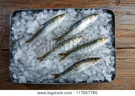 Sardines fresh fishes on ice tray and wooden table