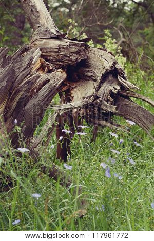 old tree stump in the forest