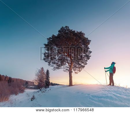 Woman skiing in a winter forest and looking to a big tree