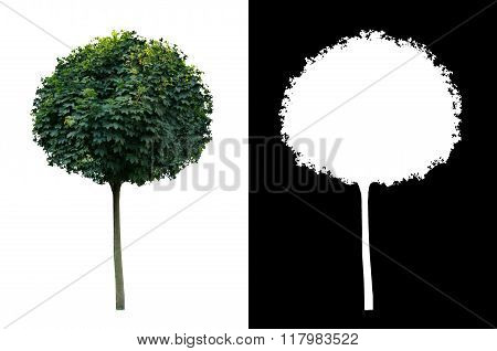Decorative evergreen tree 2