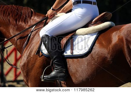 Show Jumper Horse During Training With Unidentified Rider
