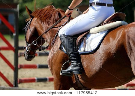 A Show Jumper Horse During Training With Unidentified Rider