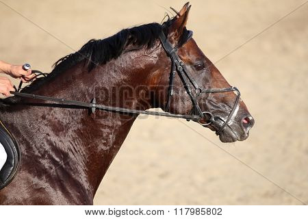 Side View Portrait Of A Running Jumping Horse