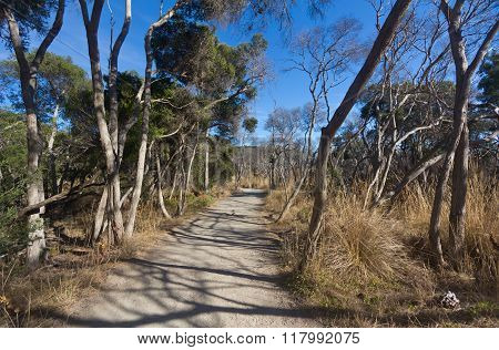 Landscape View Of Path In The Outback Bush Of Australia