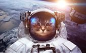 Astronaut cat in outer space against the backdrop of the planet earth. Elements of this image furnis poster