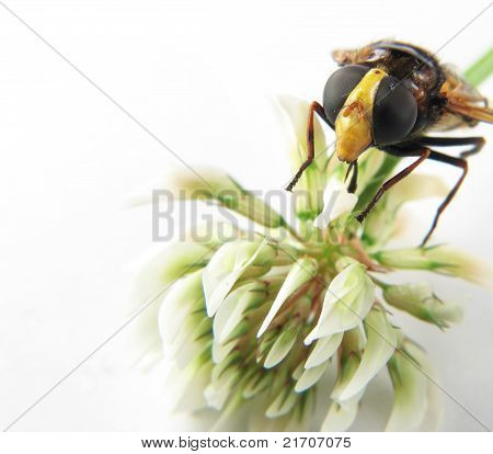 Macro Of The Head Of A Wasp On A Flower