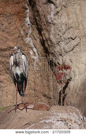 Aves de altura