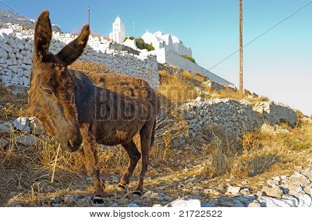 Donkey And The Church