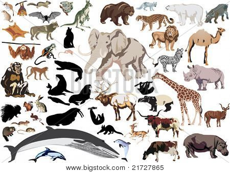 set of wild mammals isolated on white background