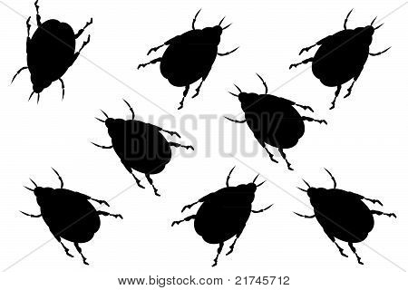 Black beetles on white background