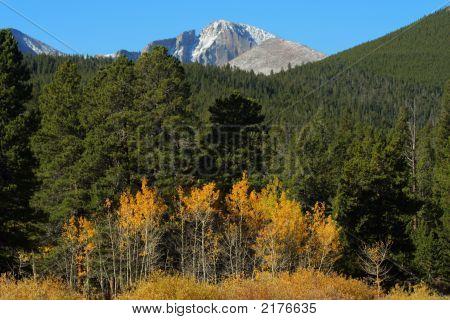 Longs Peak And Autumn Aspens