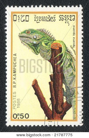 Green Iguana Or Common Iguana
