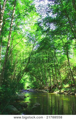 Lush River