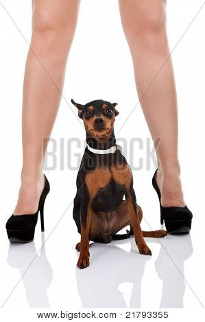 Sexy Legs And Dog