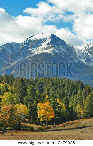 Autumn Rocky Mountain Trees And Snowy Peaks