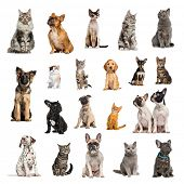 Large collection of 10 dogs and 10 cats, adult, puppy or kitten, in different position, Isolated on  poster