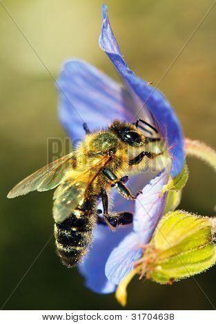 abelhas, polinizada da flor azul