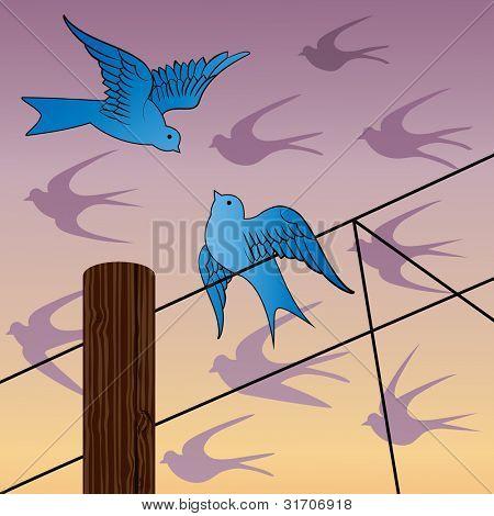 Birds at daybreak