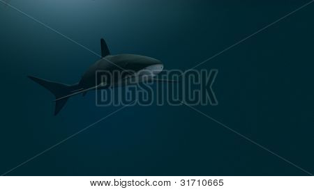 shark in ocean waters
