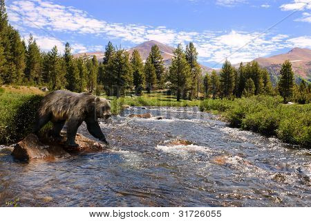 Grizzly bear crossing stream