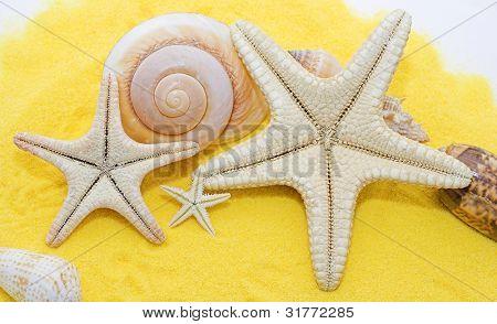 Seaside Assortment
