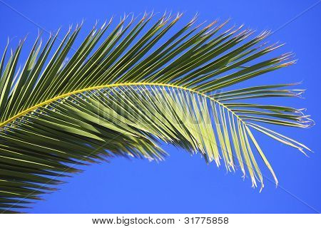 Palmtree leaves isolated on blue