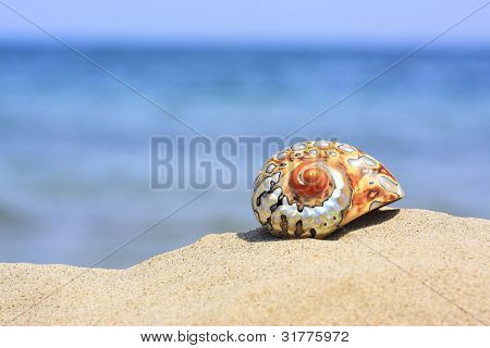 colorful shell on sandy tropical beach