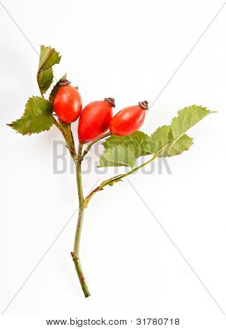 hip rose isolated on white background