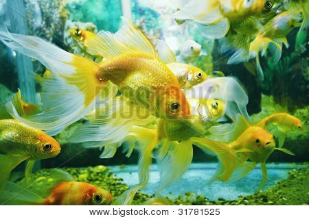 underwater image of reef and colorful fishes