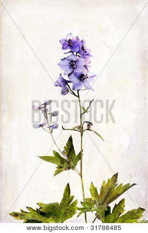 Watercolored Delphinium