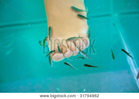 Fish spa treatment with garra rufa �¢?? doctor fish