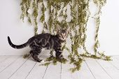 Adorable Tabby Kitten With Yellow Eyes Standing On A White Wood Floor On A Studio Set With Greenery  poster