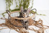 Adorable Tabby Kitten With Yellow Eyes Sitting In A Vintage Basket On A Studio Set poster