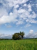 Agriculture Landscape In Indonesia As An Agrarian Country In South East Asia poster