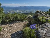 View On Valley Of Liptov Valley From Hiking Trail On Baranec With Yellow Trail Sign And Blooming Blu poster